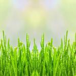 Трава зелень № 6321