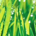 Трава зелень № 7088