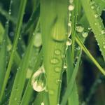 Трава зелень № 7465