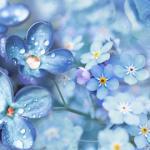 Сине-голубые цветы №  7564