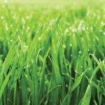 Трава зелень № 7665