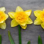 Желтые цветы № 7924