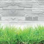 Трава зелень № 8658