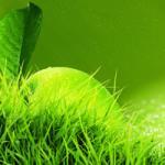 Трава зелень № 8806