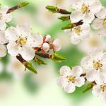 Цветы и фрукты холст