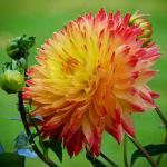 Цветы и фрукты холст 6
